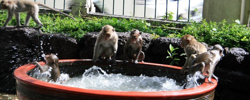 Lopburi monkey shrine