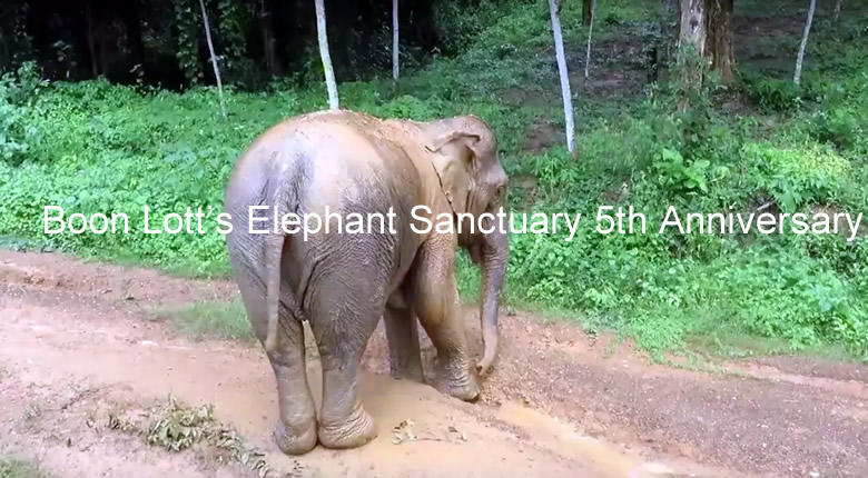 Video Boon Lotts Elephant Sanctuary 5th Anniversary