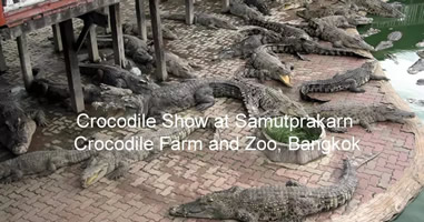 Videos Samut Prakarn Krokodilfarm