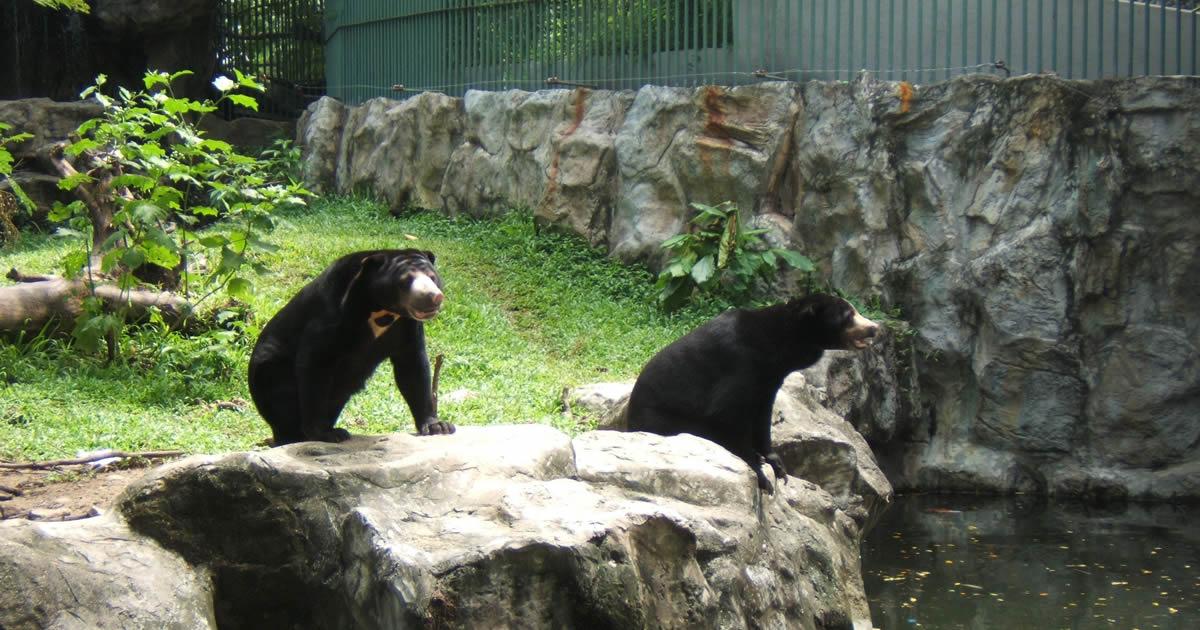 Dusit Zoo Bär