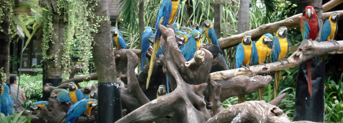 Safari World Bangkok Ara Macaws
