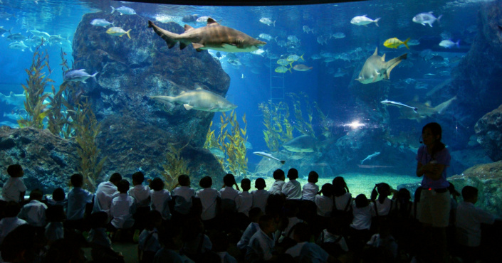 Die Sea Life Siam Ocean World in Bangkok